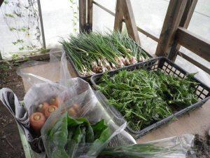 農業体験 4月3日_07