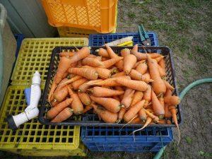 農業体験 4月3日_08