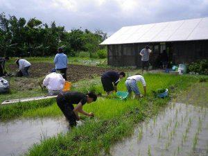 農業体験 4月17日、24日_03