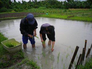 農業体験 4月17日、24日_04
