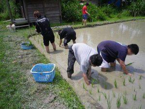 農業体験 4月17日、24日_07