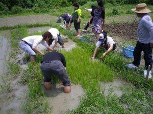 農業体験 4月17日、24日_08