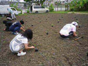 農業体験 5月15日_03