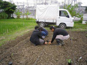 農業体験 5月15日_04