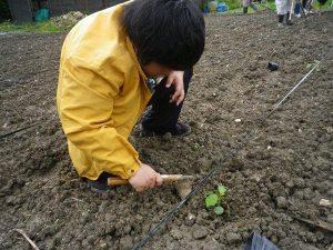 農業体験 5月15日_06