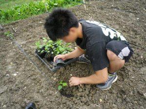 農業体験 5月15日_07