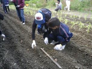 ゆめさき農園 農場風景【11月】_08
