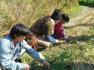 ゆめさき農園 農場風景【1月】_08