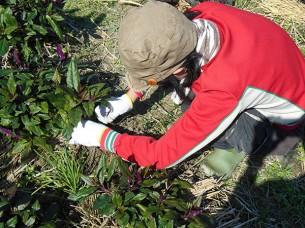 ゆめさき農園 農場風景【1月】_09