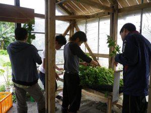 ゆめさき農園 農場風景【2月】_07