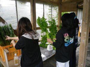 ゆめさき農園 農場風景【2月】_09