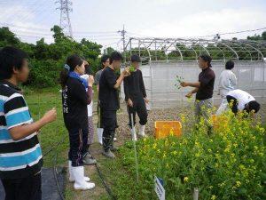 ゆめさき農園 農場風景【3月】_05
