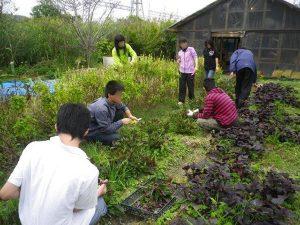 ゆめさき農園 農場風景【3月】_07