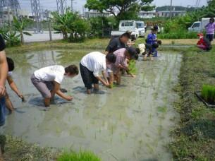 ゆめさき農園 農場風景【4月】_05